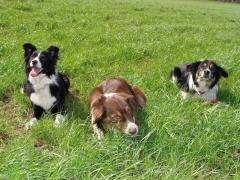 Therapiehunde Phoebe, Vinchen und Ferres