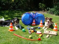 Therapiehunde Ferres und Vinchen mit Ihren Spielsachen
